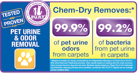 K & L Chem-Dry Pet Urine Removal Treatment in Tucson